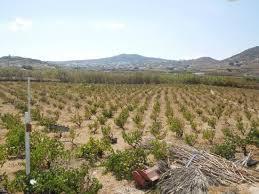Vioma Farm Mykonos